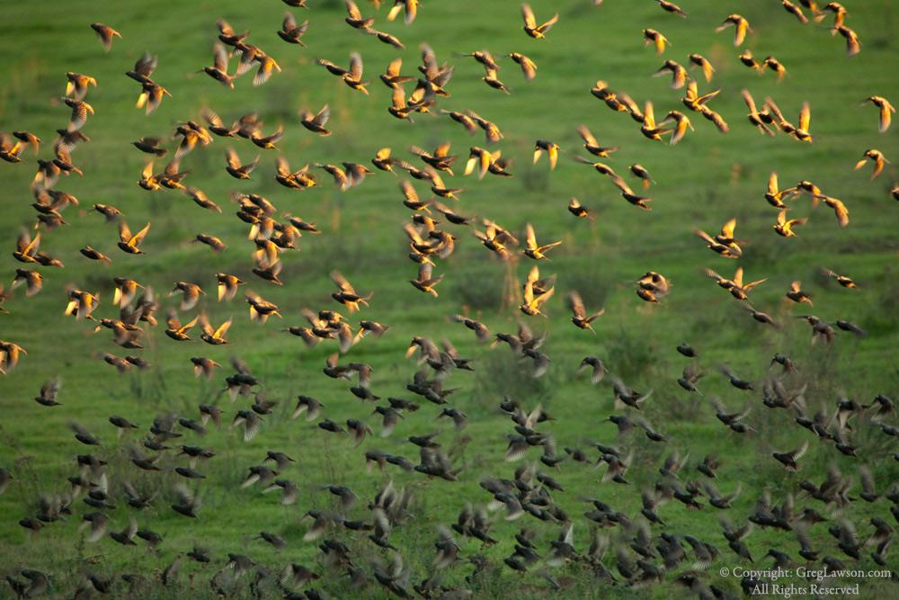 Wildlife photography by Greg Lawson