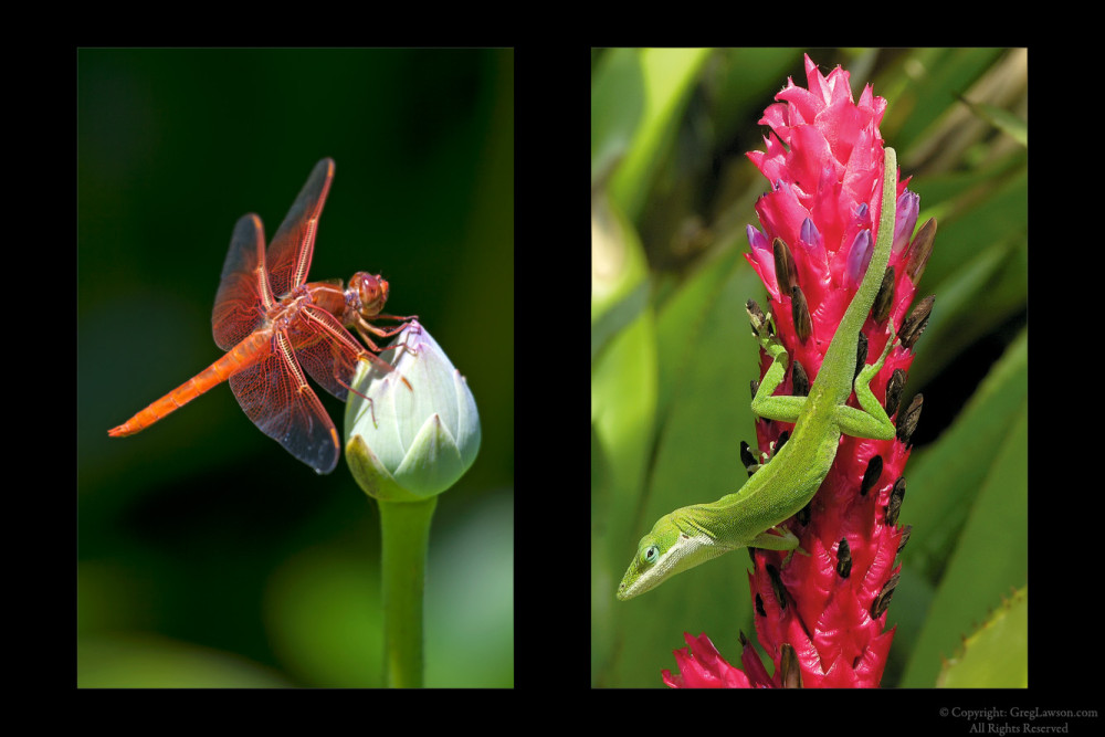 Dragonfly & Anole, Greg Lawson Galleries