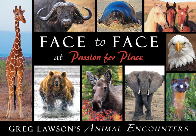 Photographer Greg Lawson's Face to Face Animal Encounters