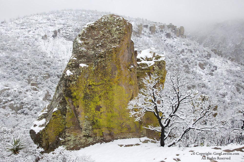Winter's wonder at Chiricahua National Monument in southern Arizona, Greg Lawson Galleries