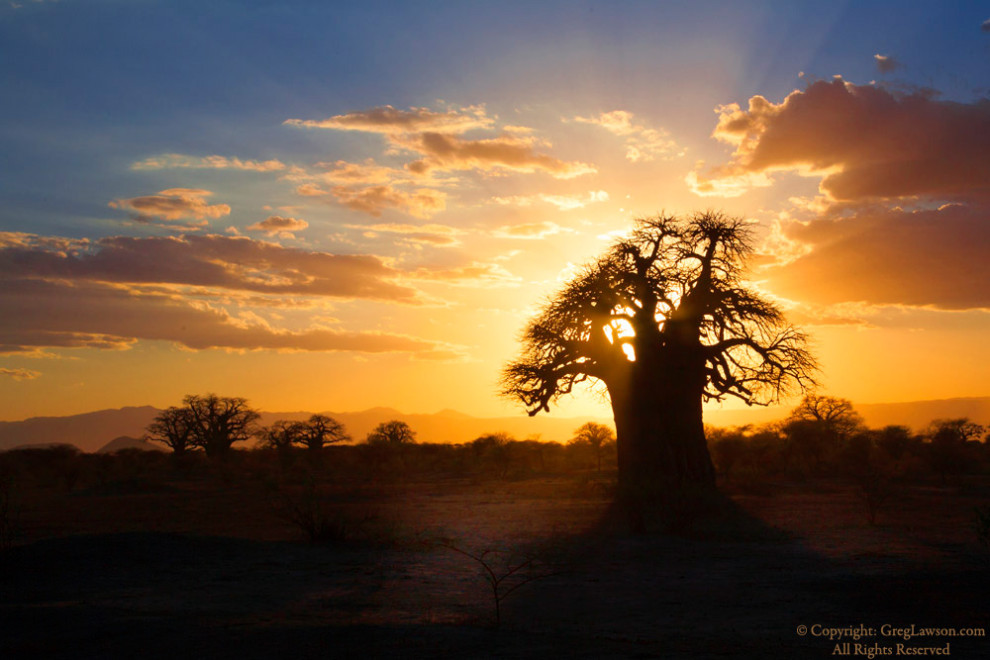 A mighty baobab poking at the sky in Tanzania, Greg Lawson photography galleries