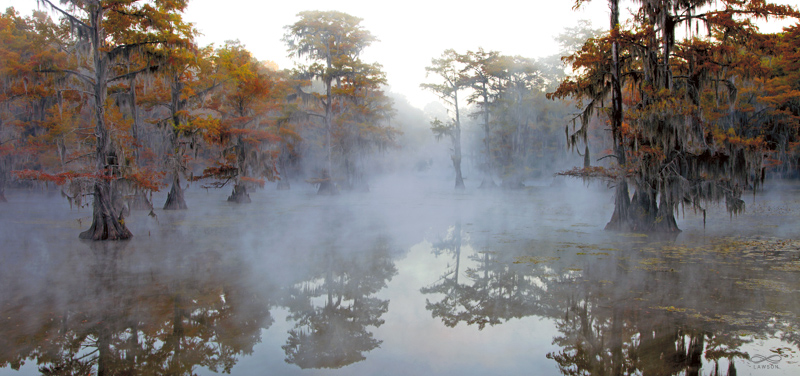 Greg Lawson Photography Caddo Lake