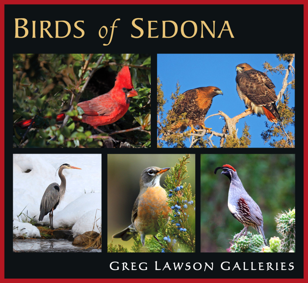 """Birds of Sedona"" with Dena Greenwood at Greg Lawson Galleries"