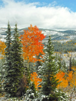 """Fall Into Winter"" at Greg Lawson's Passion for Place Gallery in Sedona, Arizona"