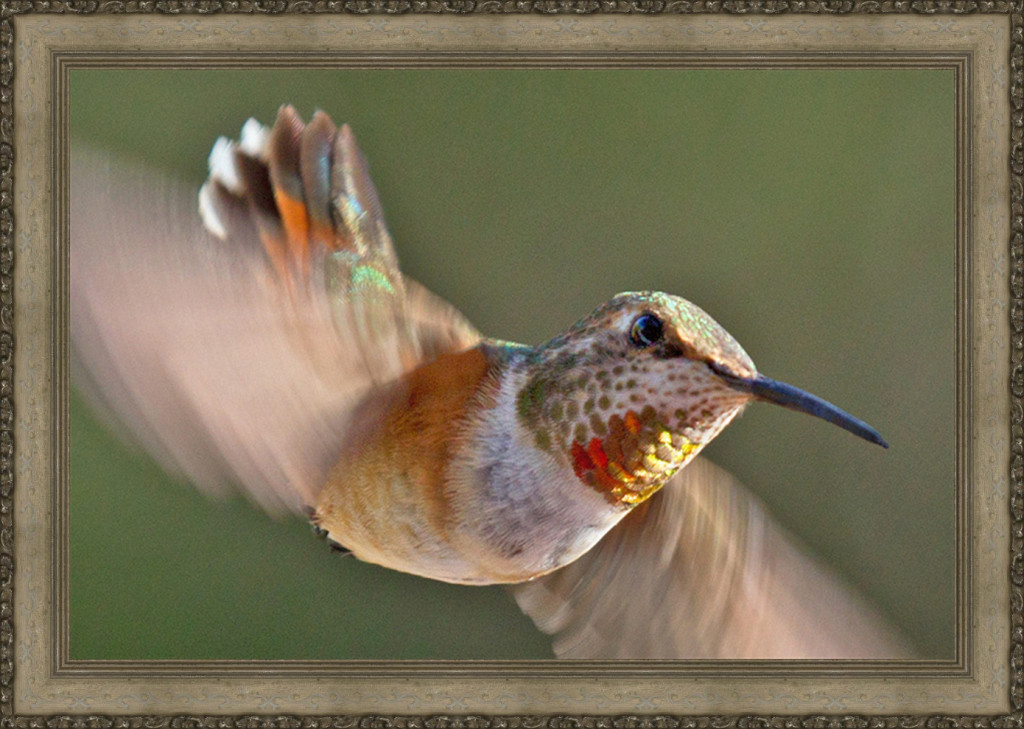 Sedona Hummingbird Festival Season at Greg Lawson Galleries