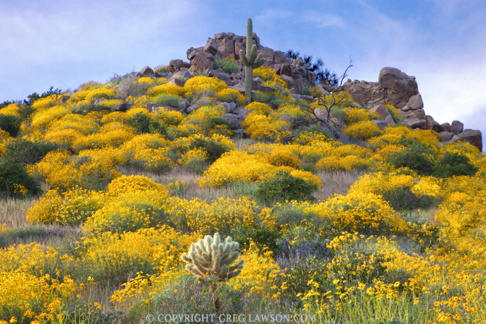 """Sonoran Brights"" at Greg Lawson Galleries, Arizona's largest photographic art gallery"