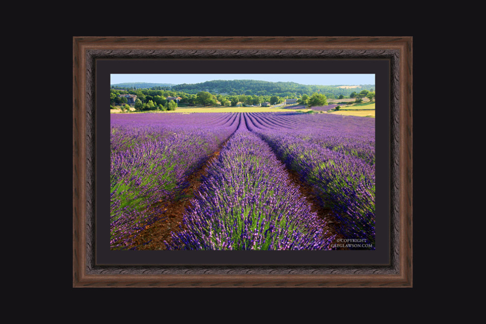 Fields of lavender perfume the air with the signature fragrance of Provence, France. Copyright Greg Lawson Art Gallery, Sedona, Arizona.