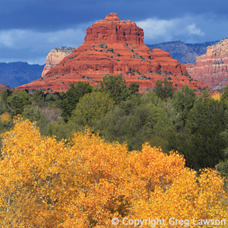 Bell Rock and golden sycamores in autumn, Sedona, Arizona, USA. From the book: Sedona - The Nature of the Place and the Greg Lawson photography art gallery in Sedona.