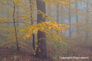 Czech Beech Forest