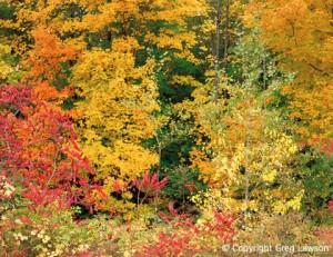 Autumnal Potpourri