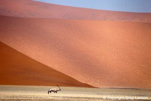 Oryx of the Sand