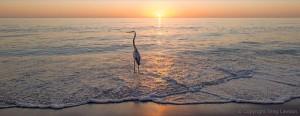 Heron's Hope