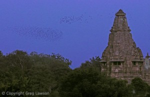 Flight at Khajuraho
