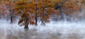 Cypress Float