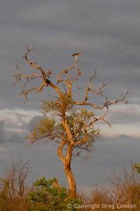 Storied Stork