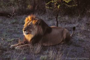 Zimbabwean King